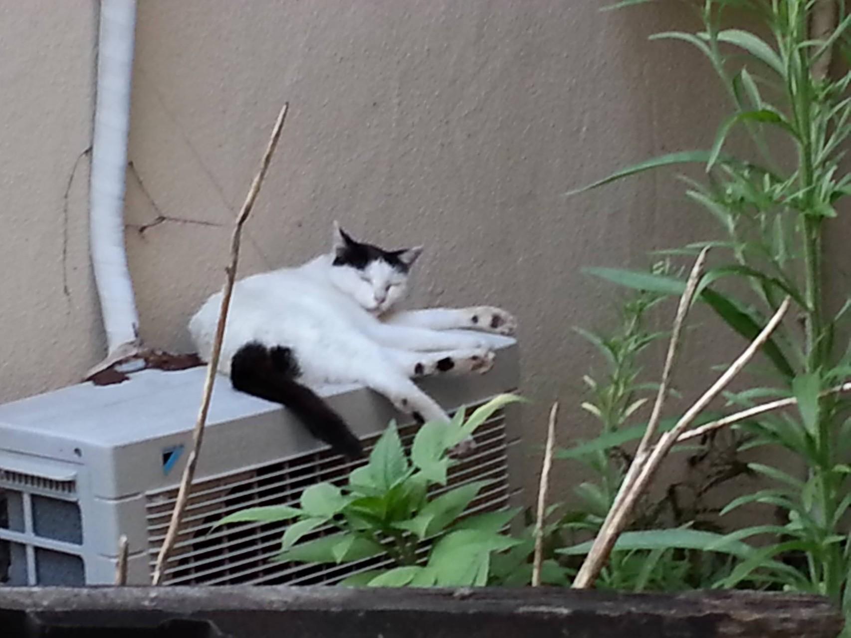 先ほどからすでに3時間近く経過。ぬこ田さん、寝返りを打っただけ。 【2014年8月6日】