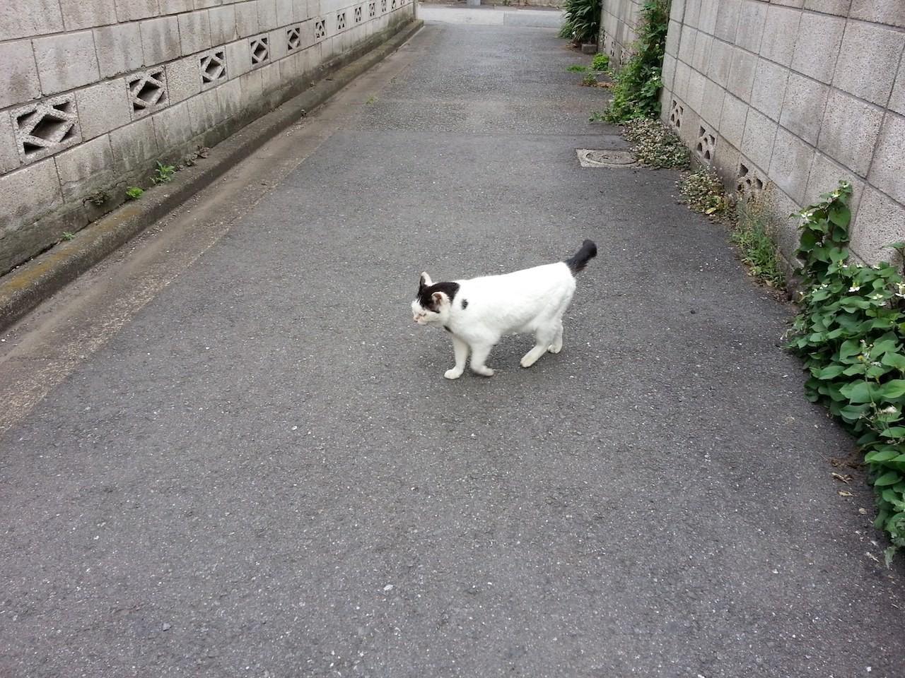 そすて、食後の散歩にゃ。 【2014年5月26日】