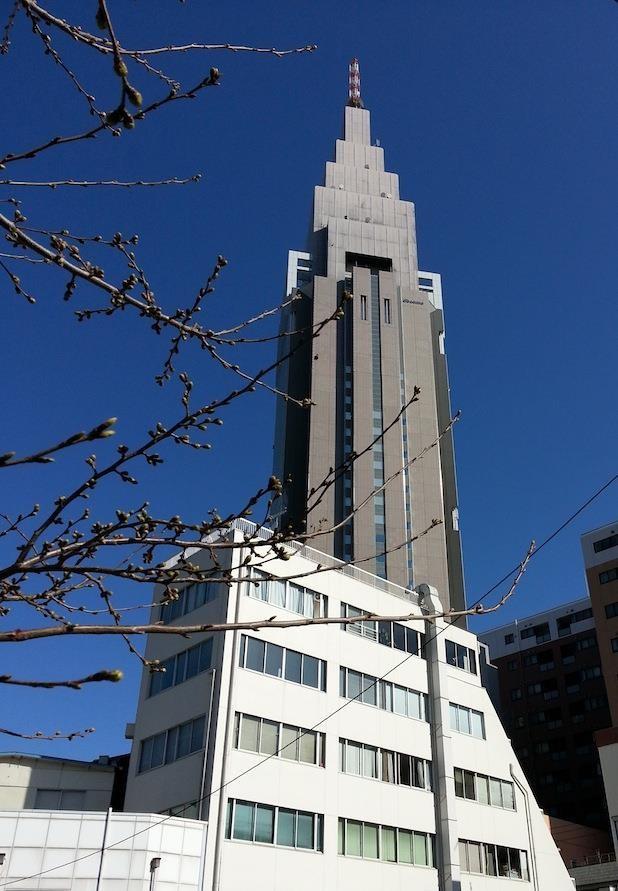 三連休中日のドコモちゃん。桜の蕾が膨らんできていまつね。 【2014年3月22日】