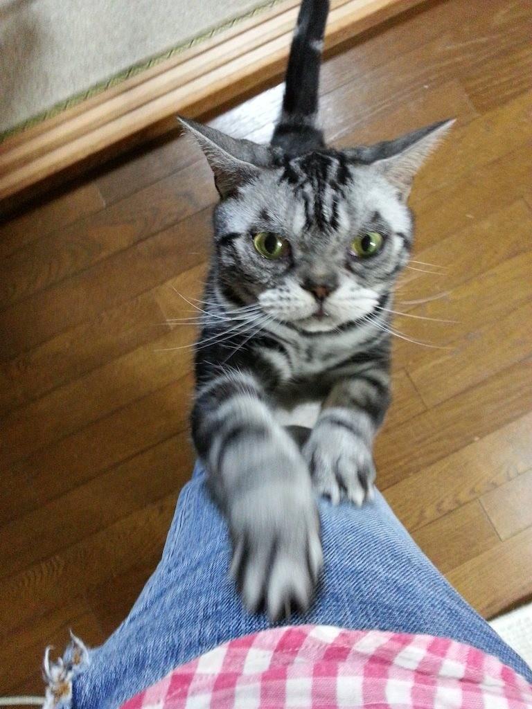 お、お、小保方かたカタカリガリガリガリ… 【2014年5月8日】