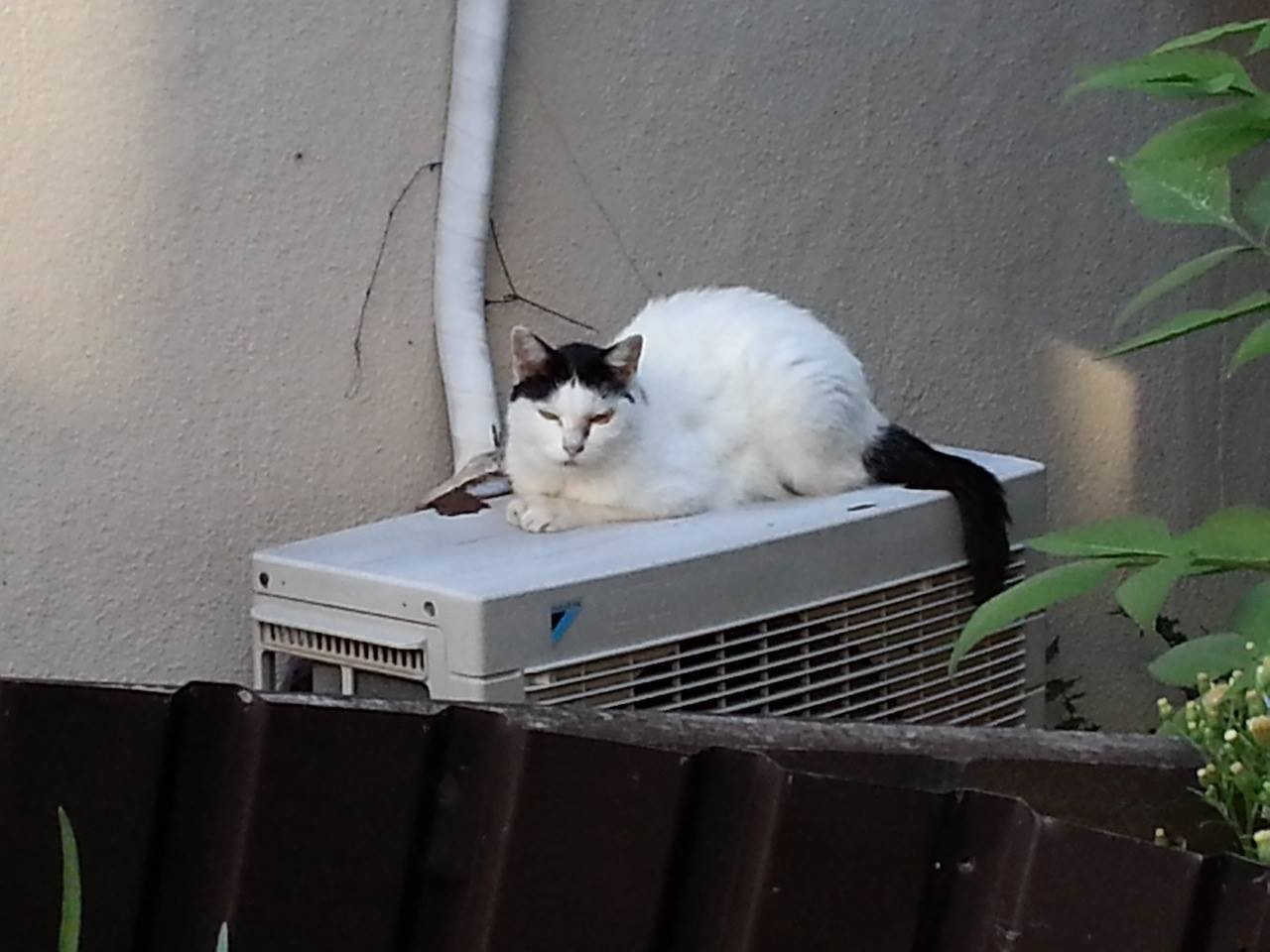 今日も暑くなりそうだにゃあ~。 【2014年8月19日】