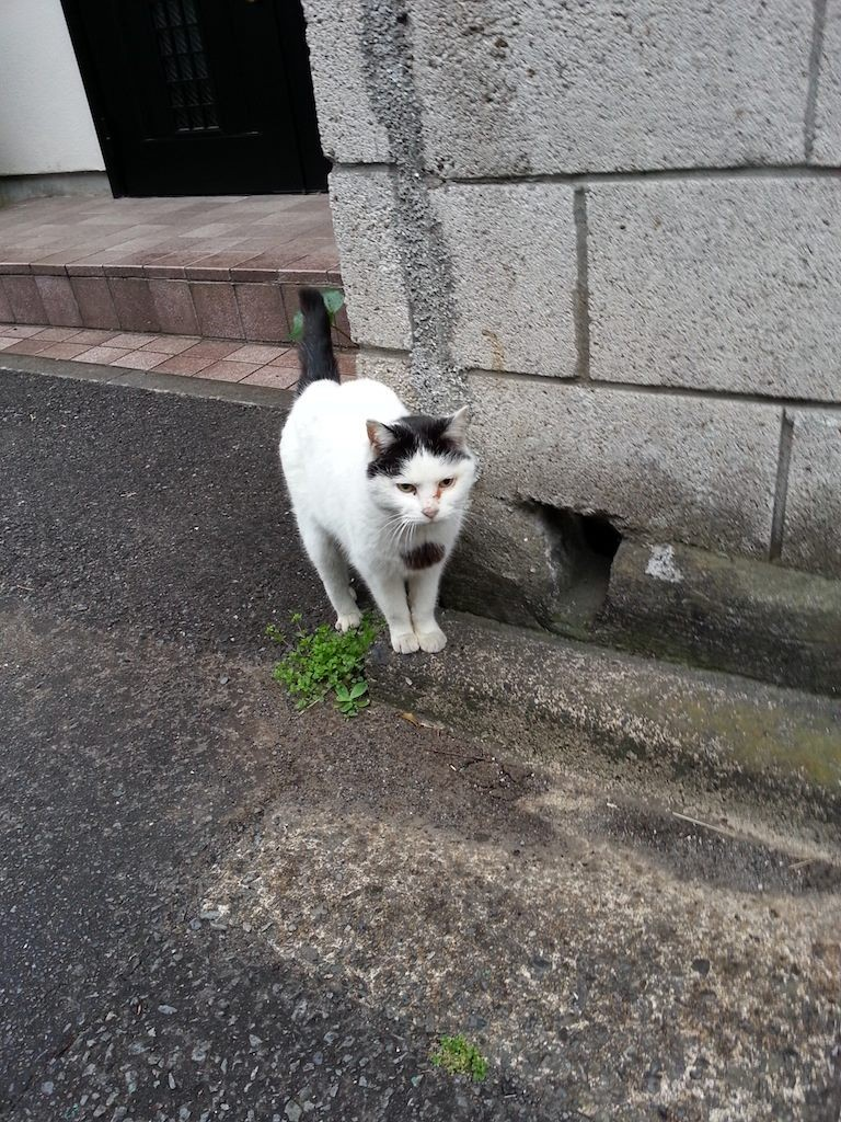 そすて、小雨降るなか佇むぬこ田さん。 【2014年4月18日】