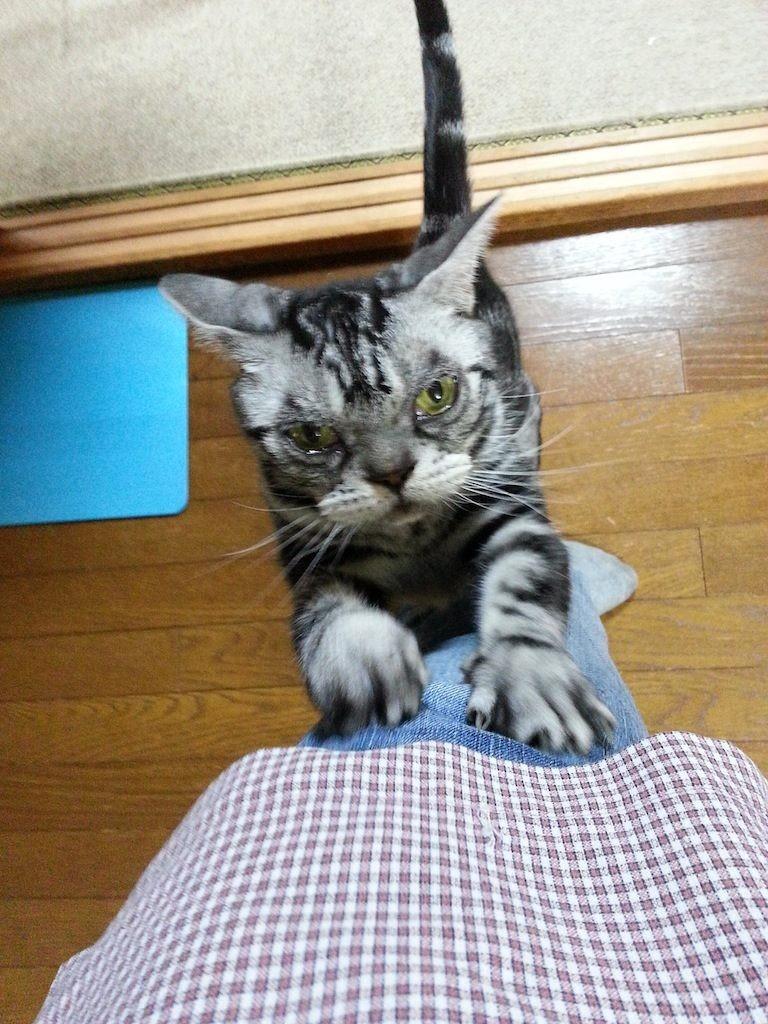 沖縄、梅雨明けしたってよ、ガリガリガリ... 【2014年6月26日】