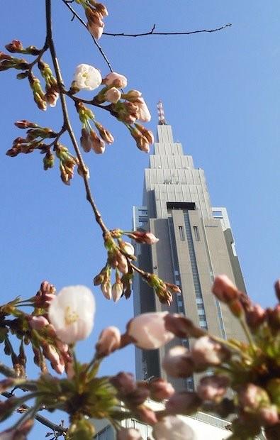 代々木のドコモ桜は、まだまだこれからざんす。 【2012年4月2日】