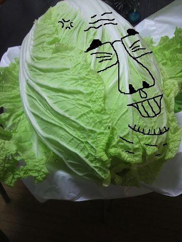 白菜まさおでつ。w 【制作日/2011年12月1日】