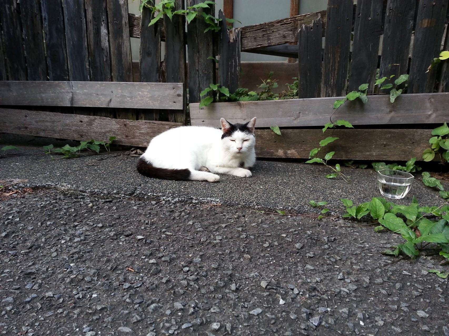 ホゲェ~~(。>д<) お疲れにゃん! 【2014年9月9日】