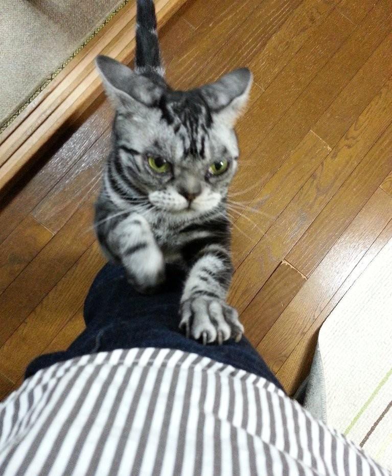 安倍ちゃん、具合悪いんとちゃう?…ガリガリ 【2014年11月18日】