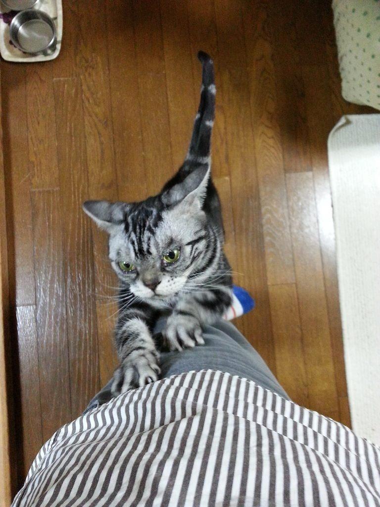 ぬこ田健作のぉ野郎ぉぉぉ~~ガリガリガリ。 【2014年3月25日】