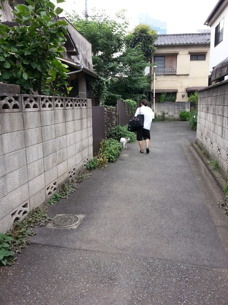 朝ご飯待ちのぬこ田さん。 【2014年7月14日】