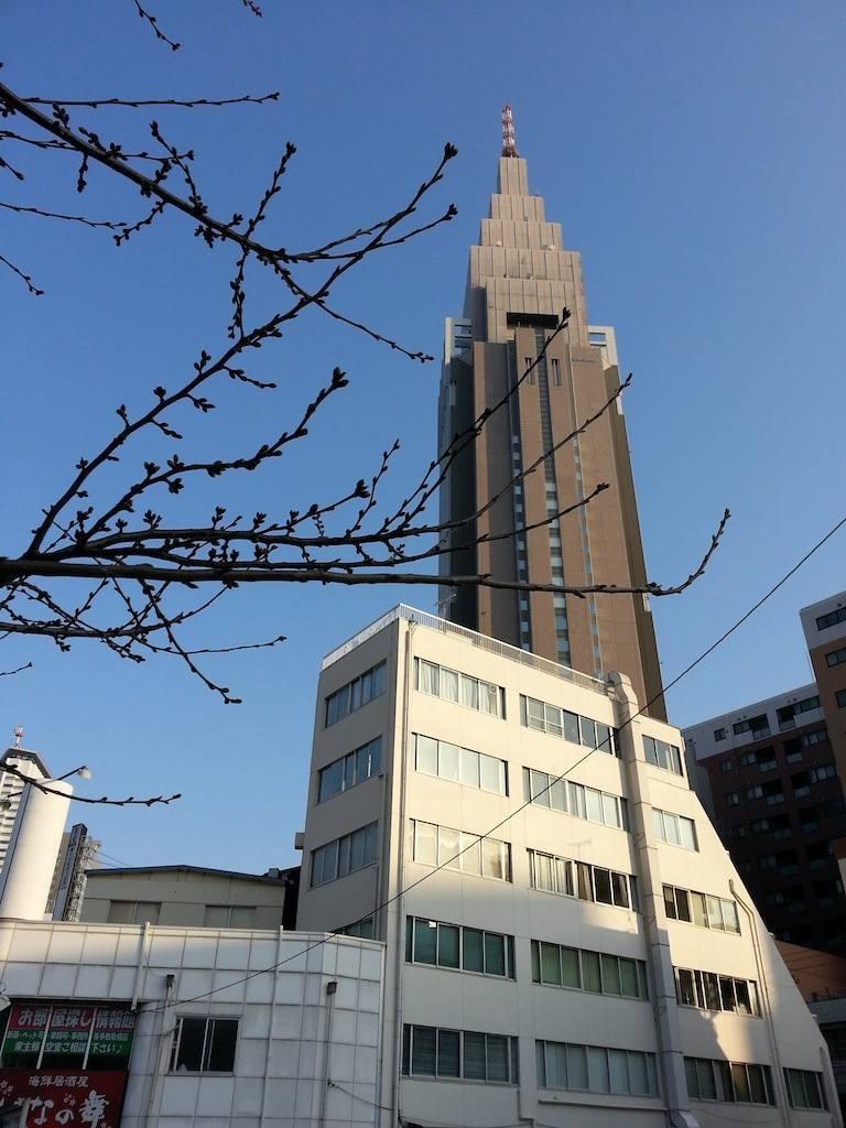 都心の桜の開花でつが、ウェザーマップが3/25、日本気象協会が3/30と予想すていまつよ。 【2014年3月17日】
