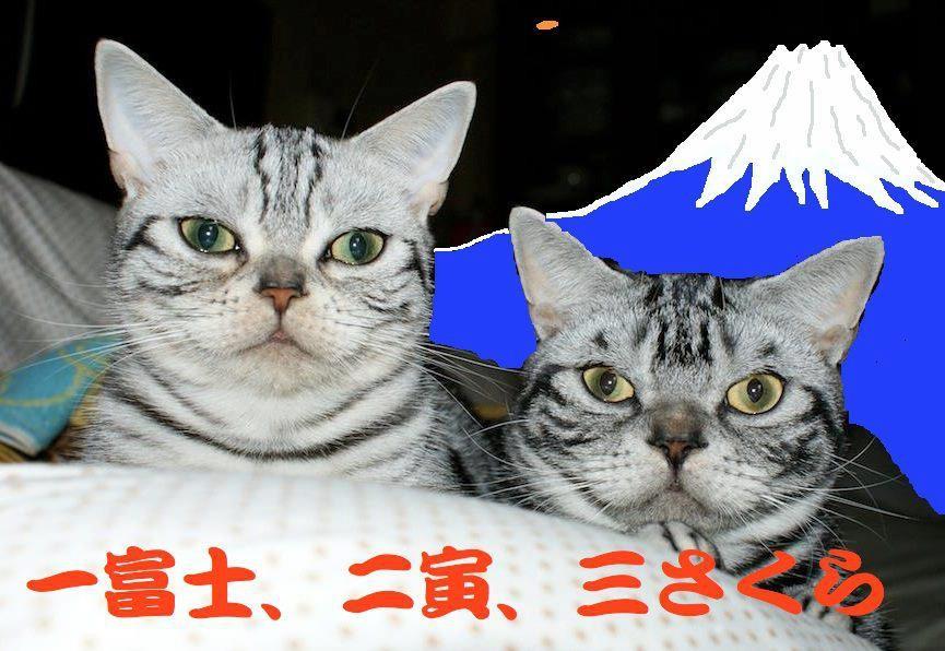 世田谷の遠藤さんが考えてくでた『一富士、二寅、 三さくら』が、今夜おでが見る初夢なんだな。 【制作日/2013年1月1日】