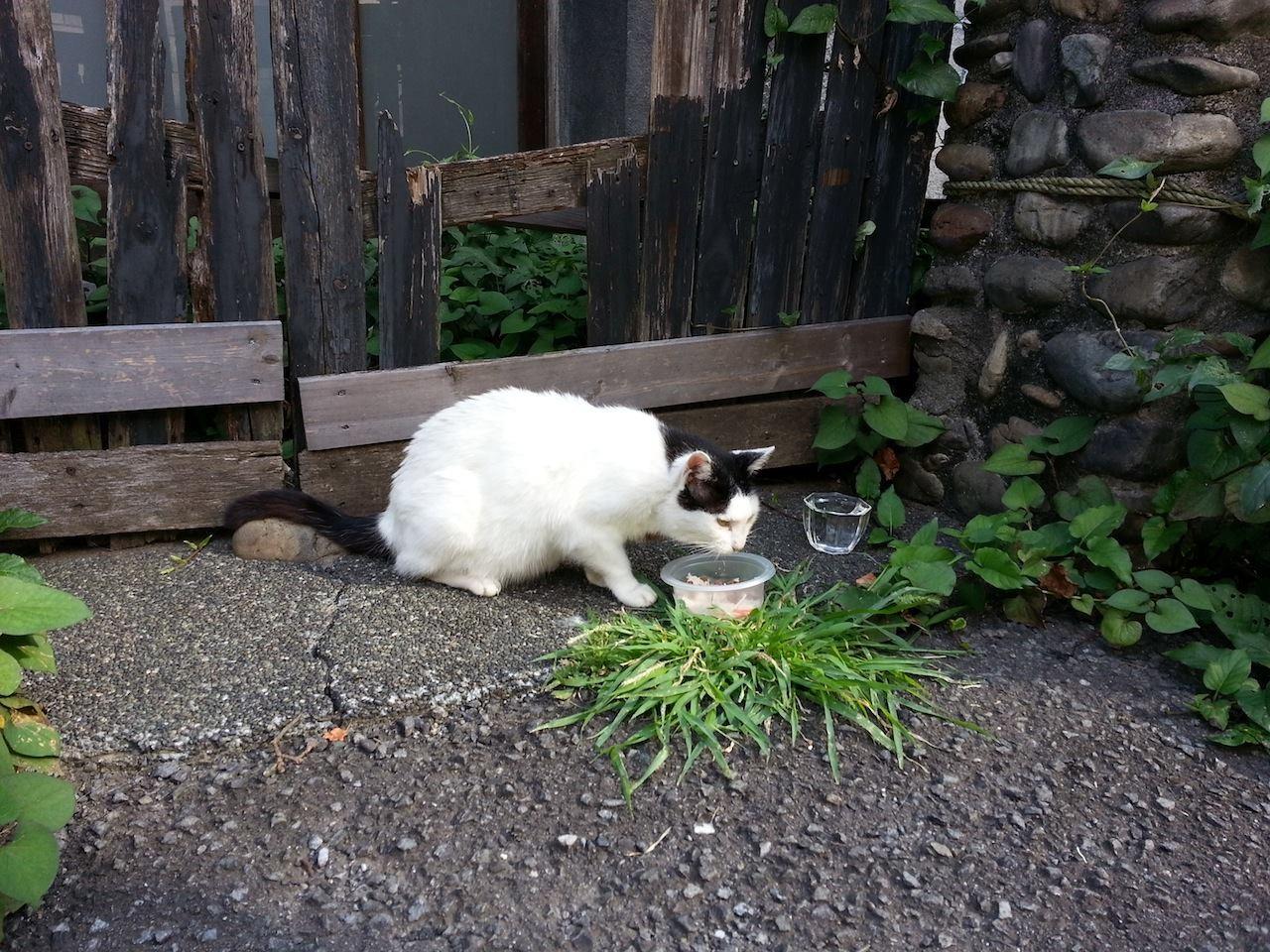 おはようにゃん! ぬこ田さん、朝食ちう。 【2014年8月2日】