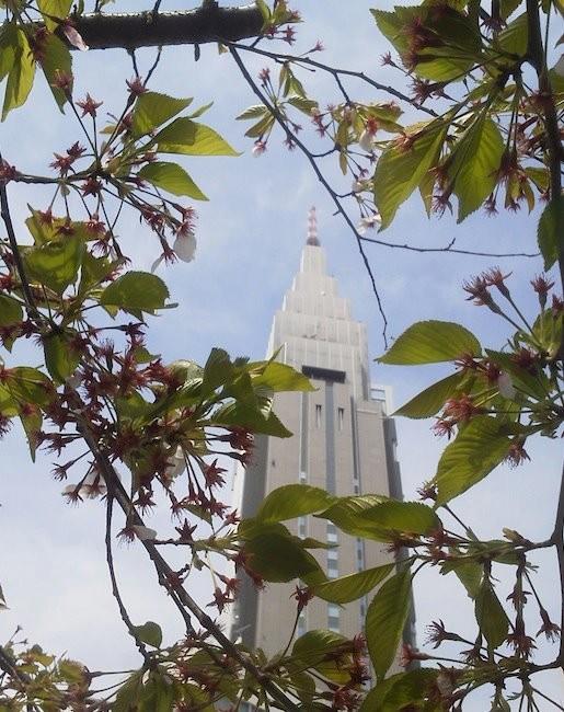 代々木のドコモ桜、今年はほぼ終了のようでつね。 【2012年4月15日】
