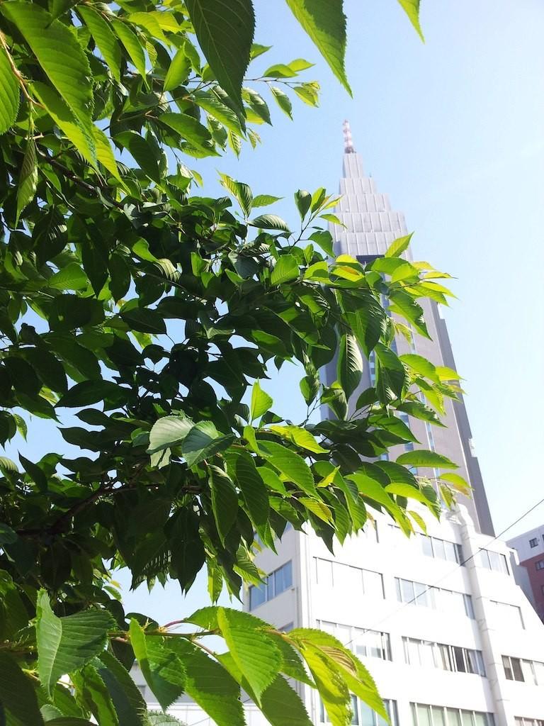 代々木駅前で、前田美波里さんに呼び止められて、『ちょっとボク、背中にサンオイルを塗ってくだ さらない?』と、サングラス越しの目線でお願いされますたよ。いやぁ~夏本番でつね、お客さん! 【2013年5月10日】