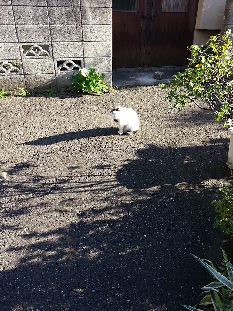 ぬこ田さんと影。 【2014年11月18日】