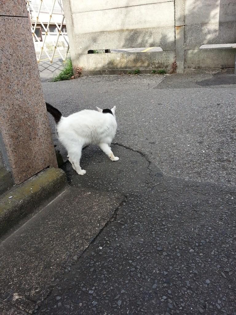 かいいの...w 【2014年8月13日】