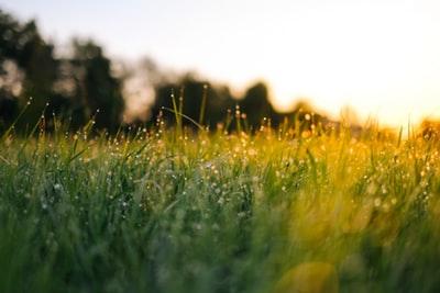 除草剤、グリホサートは安全なのか?