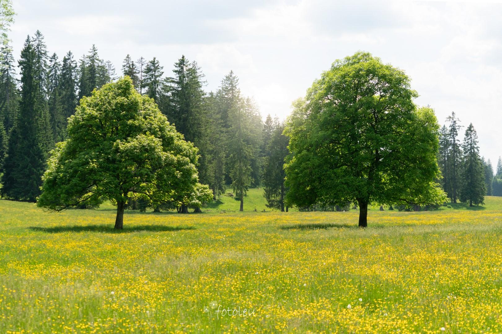 Naturlandschaften im Jura