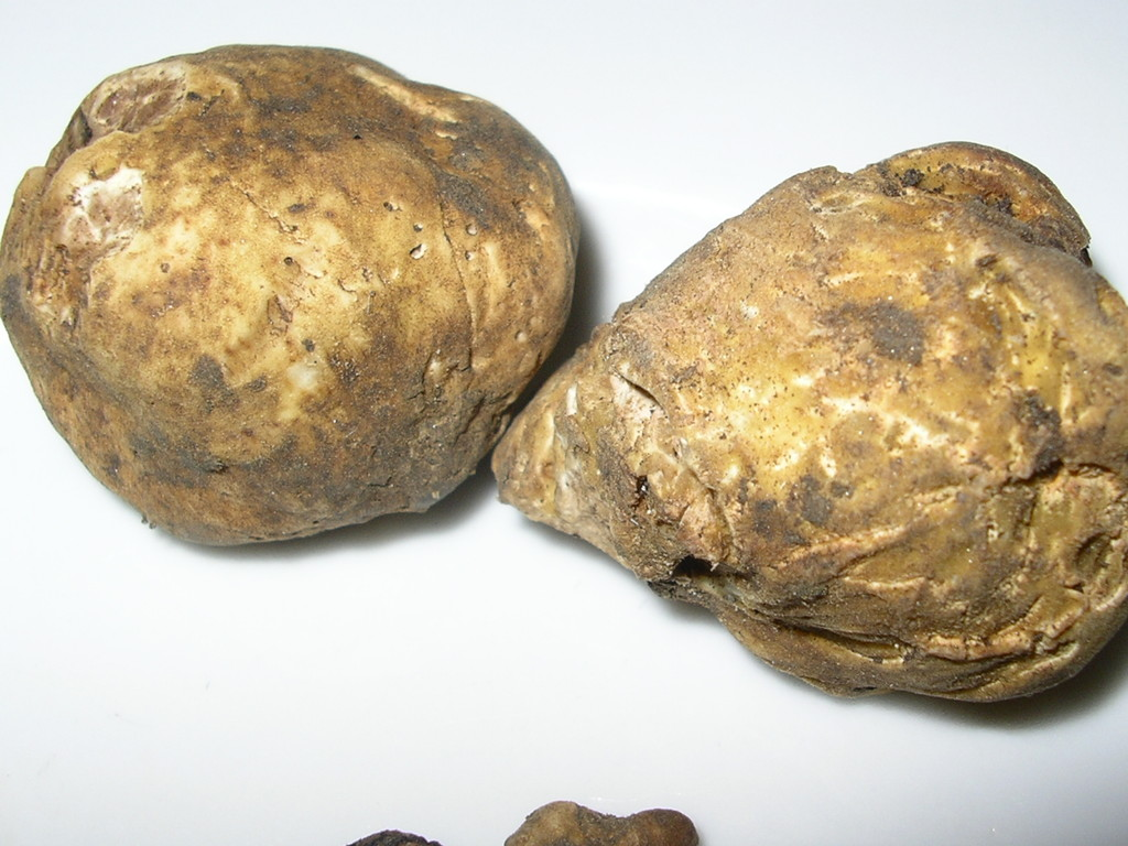 T. Magnatum Pico (Bianco)