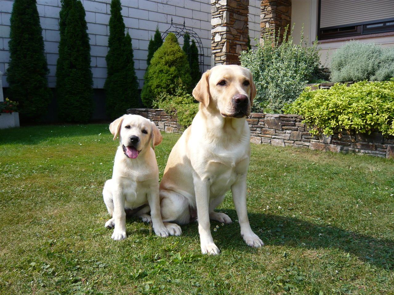 Cheyenne (14 weeks) und Casey