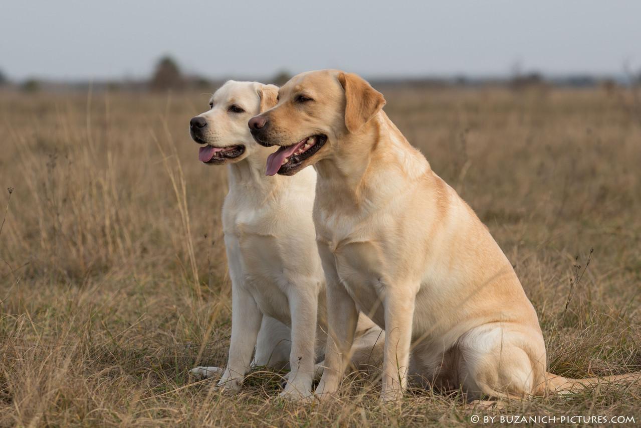 Cheyenne (6 month) und Casey (2,5 years)