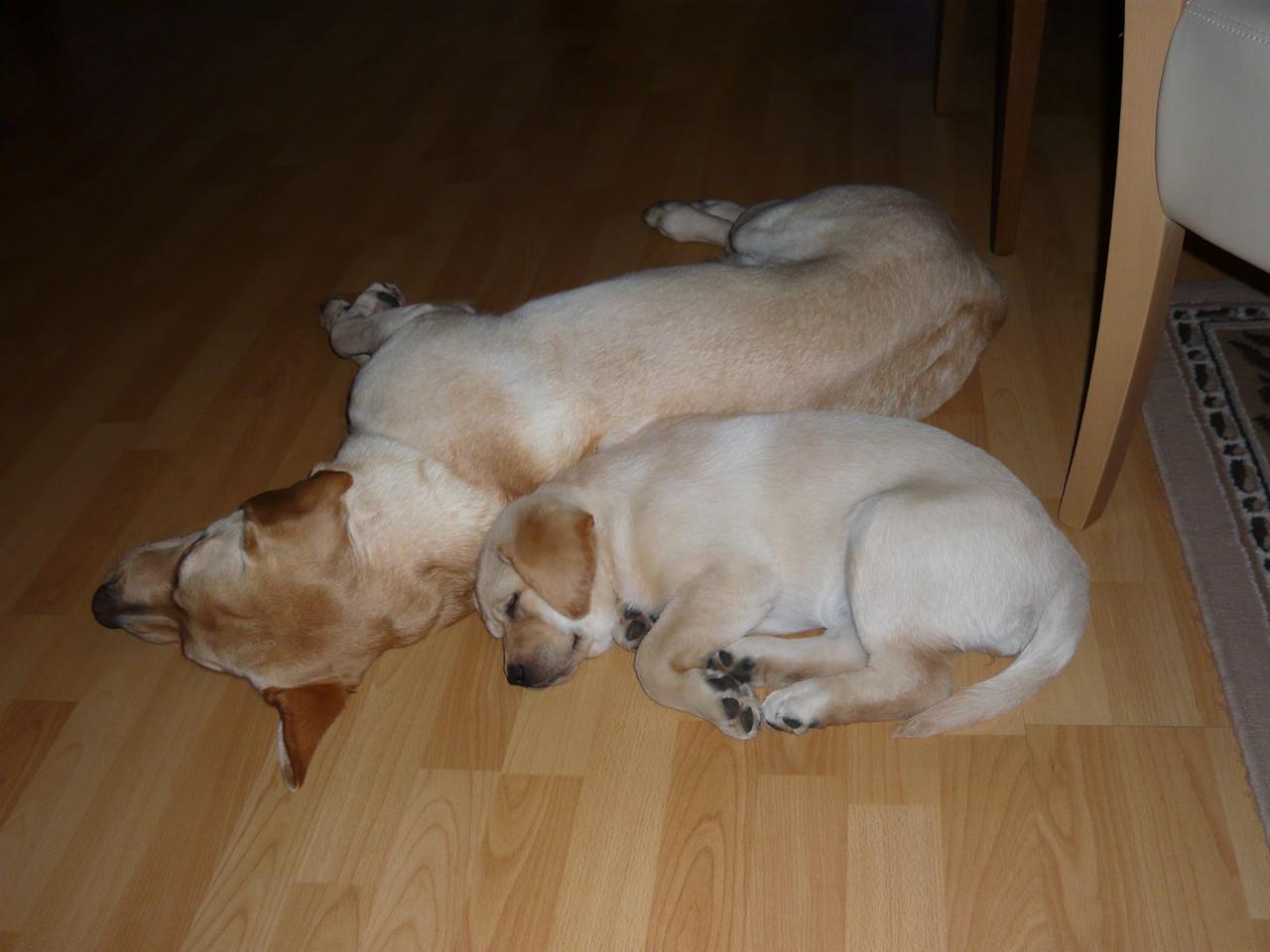 Casey (2 years) und Cheyenne (9 weeks)