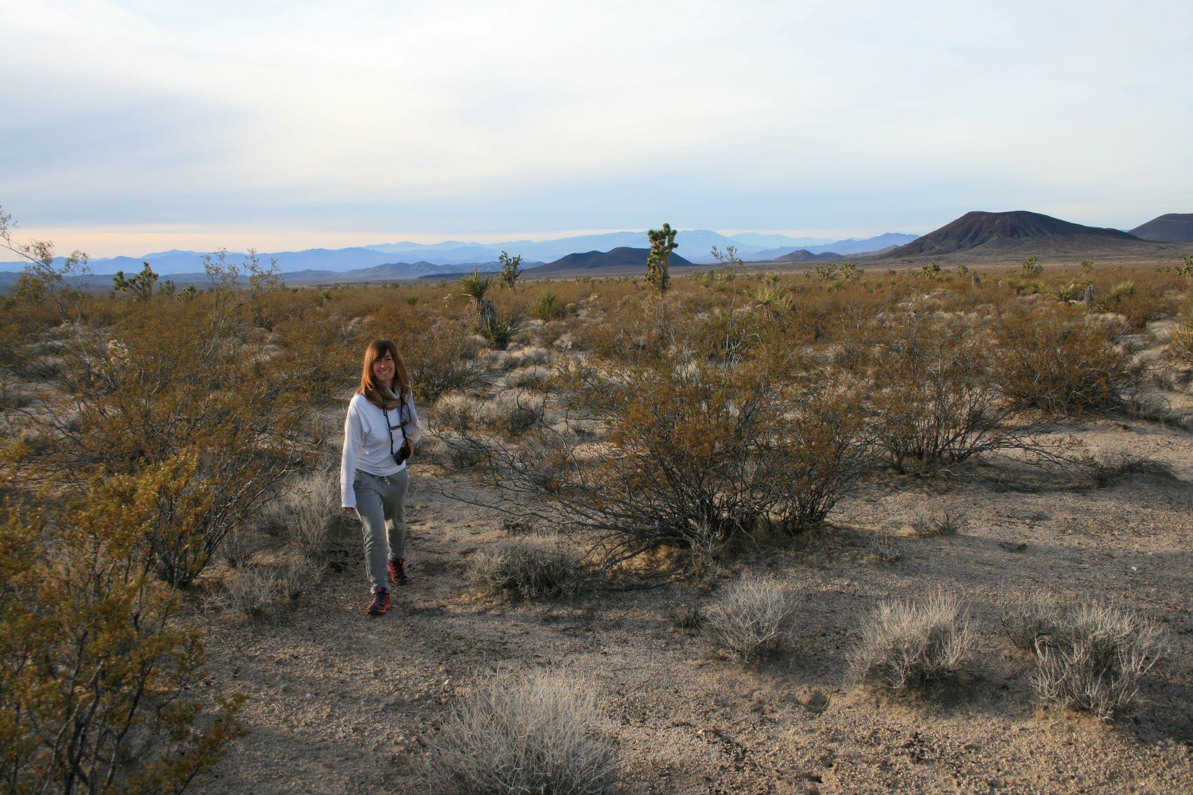 in der Mojave-Wüste