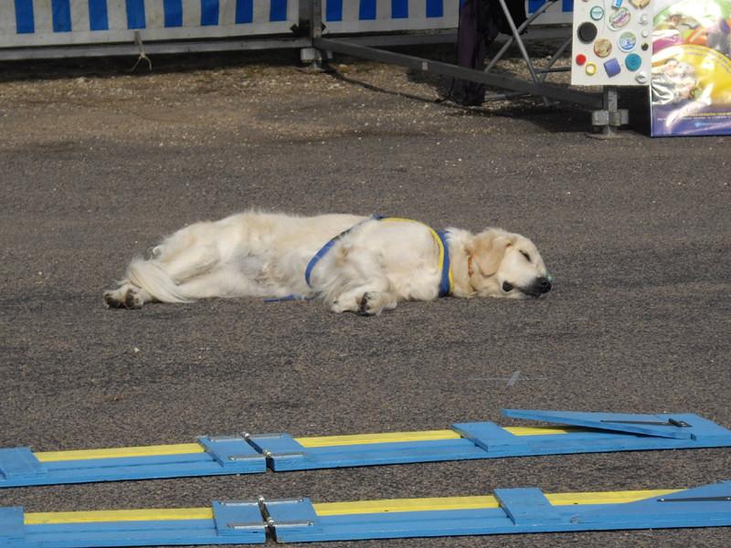 La star est fatiguée!