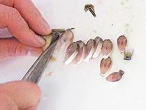 鮎の背骨ごと切る