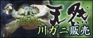 モクズガニ(川ガニ)販売