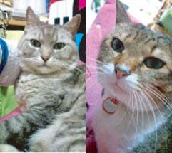 母の愛する猫たち