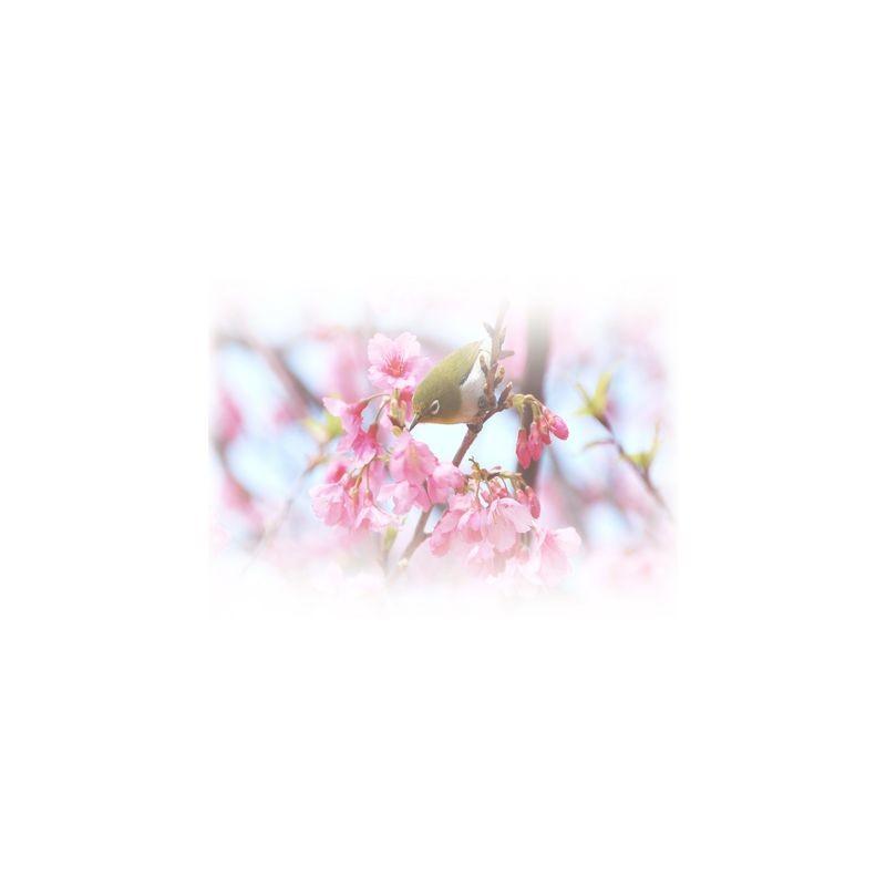 Артикул Freezone 21. Размер тюлевого полотна - шир.290 см выс.300 см; размер рисунка 155х140 см; состав - 100% полиэстер