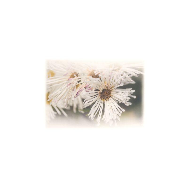 Арт.Freezone 5. Размер полотна ш290 в300 см; размер рисунка  140*100 см; состав - 100% полиэстер