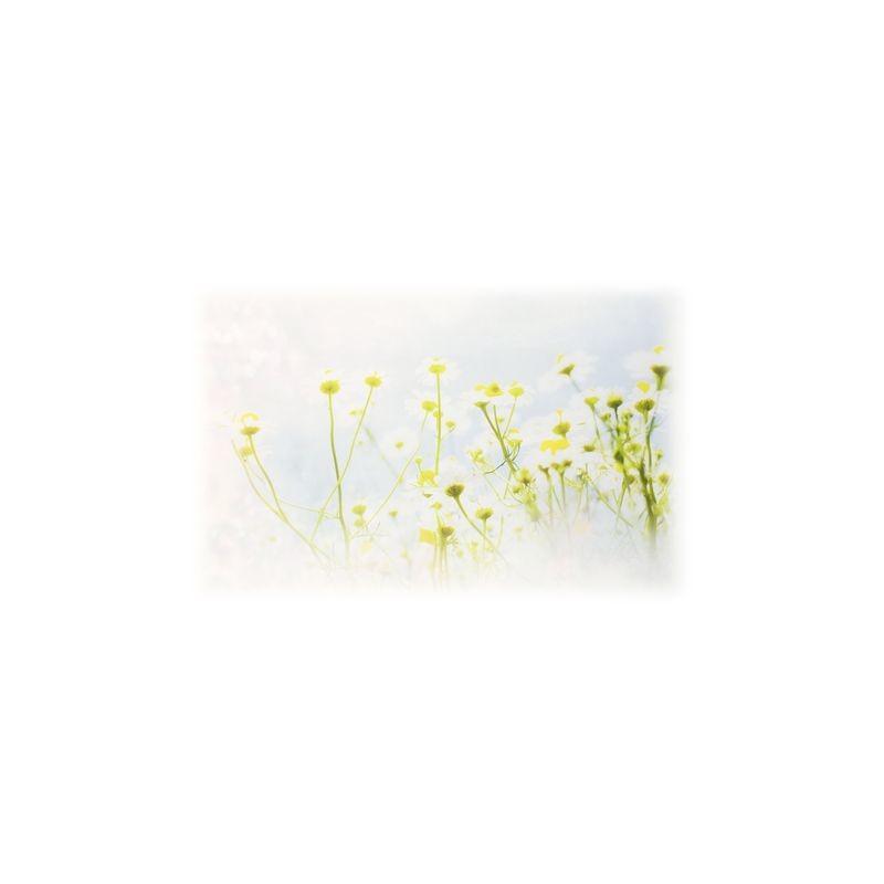 Артикул Freezone 18. Размер тюлевого полотна - шир.290 см выс.300 см; размер рисунка 155х140 см; состав - 100% полиэстер