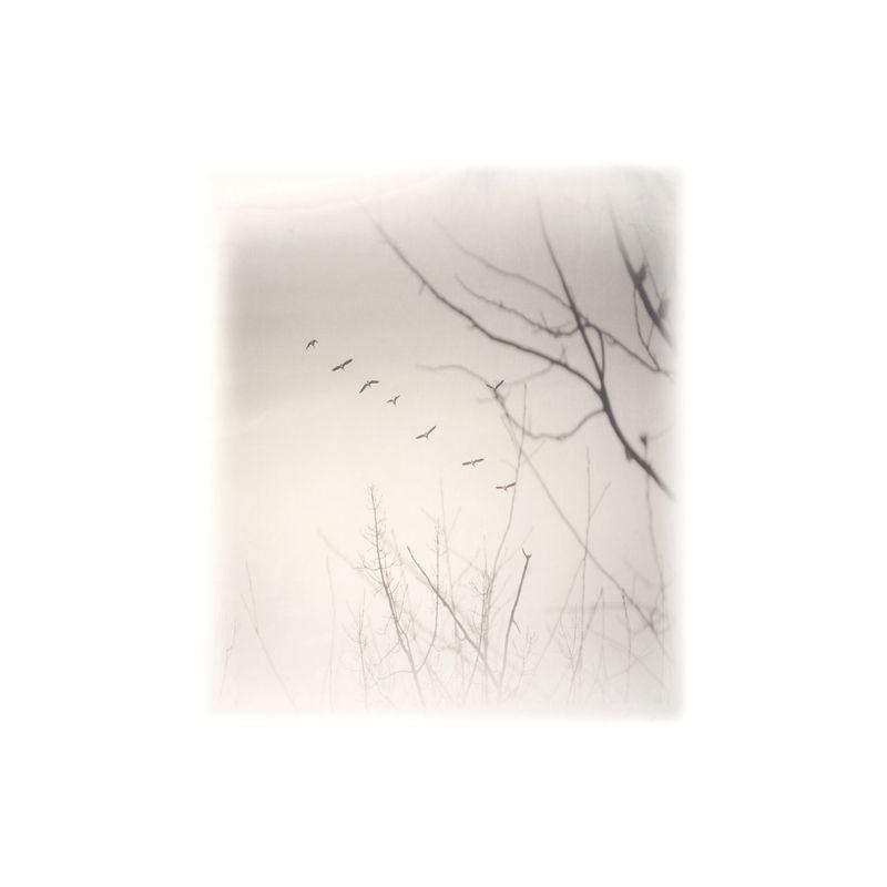 Арт.Freezone 4. Размер полотна ш290 в300 см; размер рисунка 150*170см; состав - 100% полиэстер