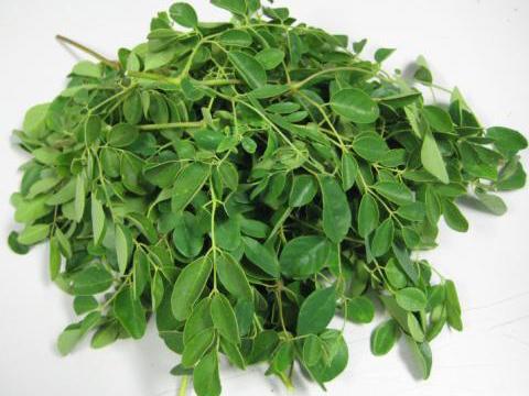 Hoja fresca de Moringa Oleifera
