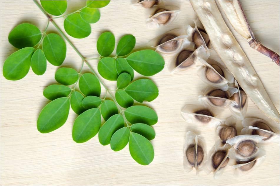 Hoja y semillas de Moringa Oleifera
