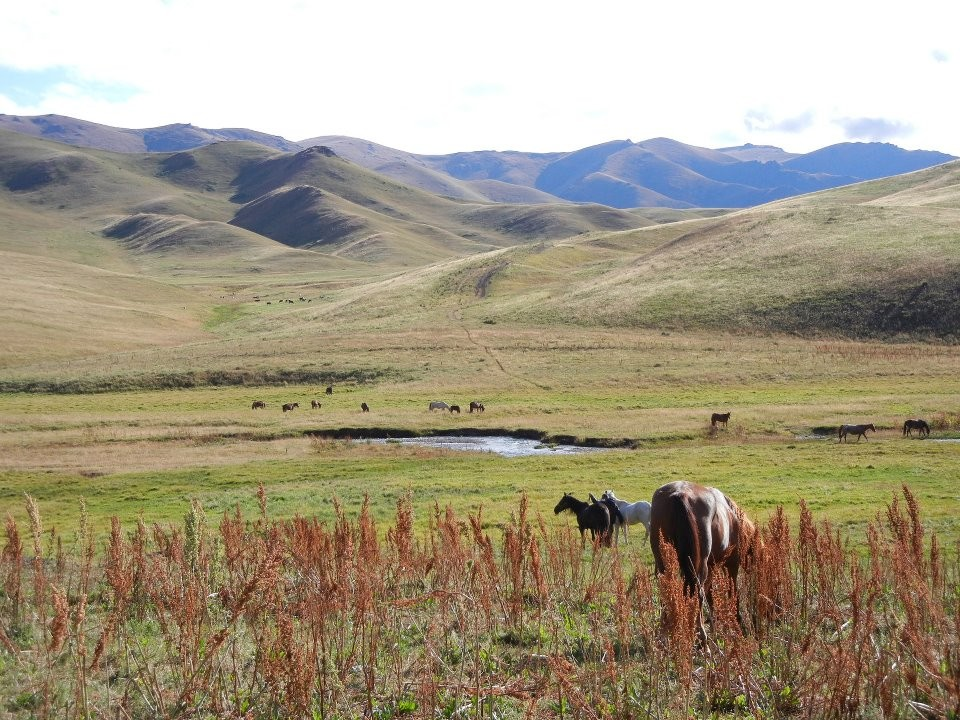 Wild horses in the mountains, Kyrgyzstan