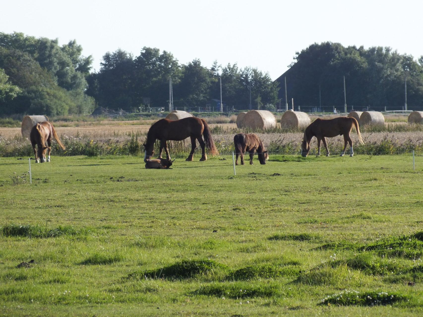 einige unserer Ponys