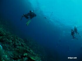 石垣島 ダイビングショップ 潜人(うりやーさー)潜水漁 電灯潜り