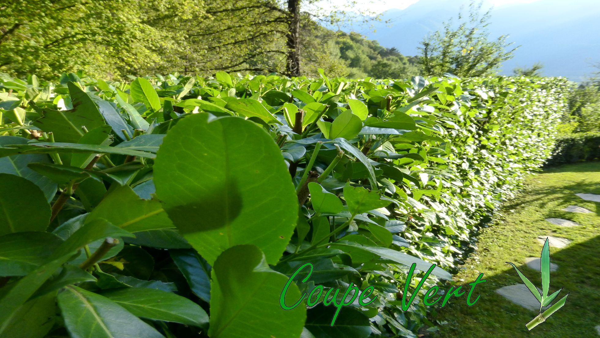 Coupe vert espaces verts jardinage ext rieur for Entretien espace vert 86