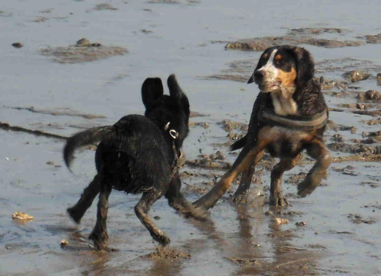 Hundebekanntschaft im gleichen Alter getroffen