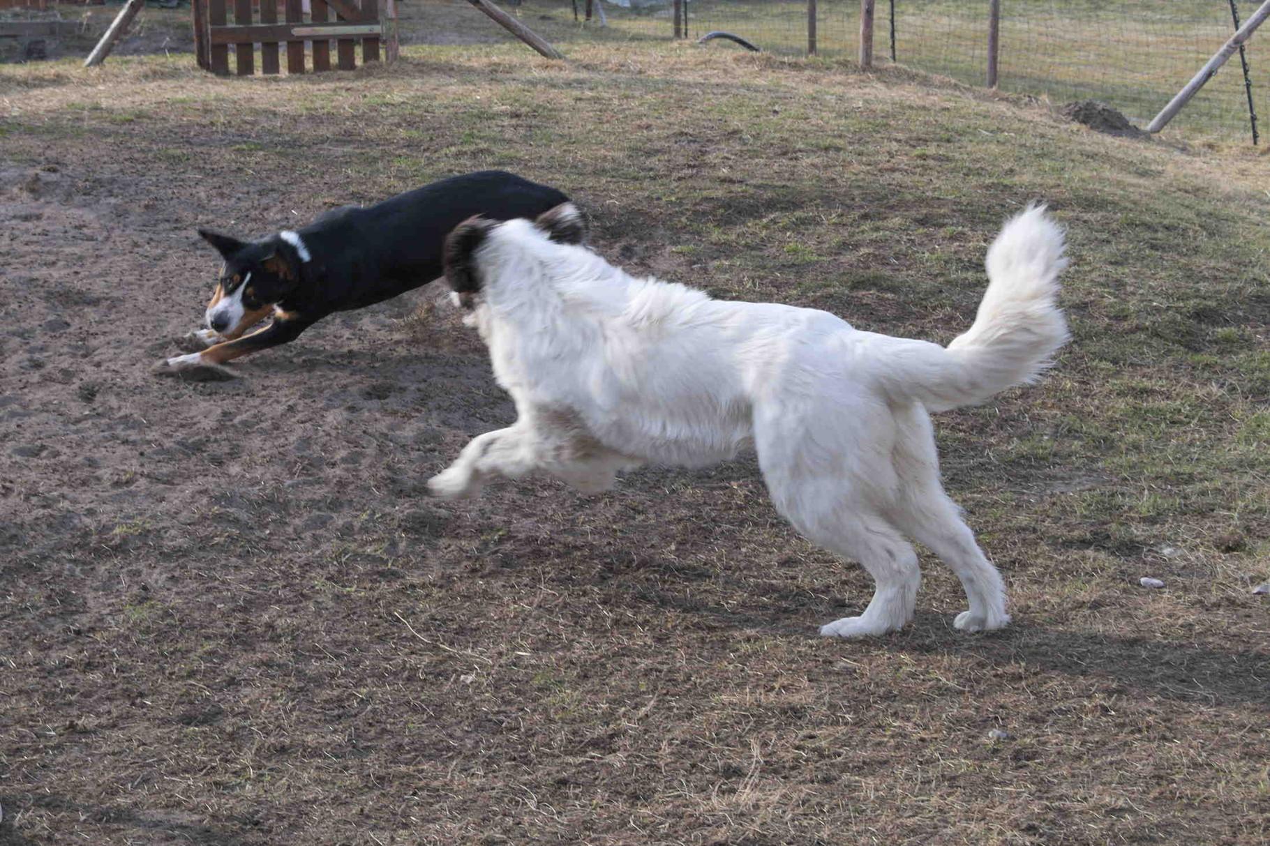 beim Hundespieltreff