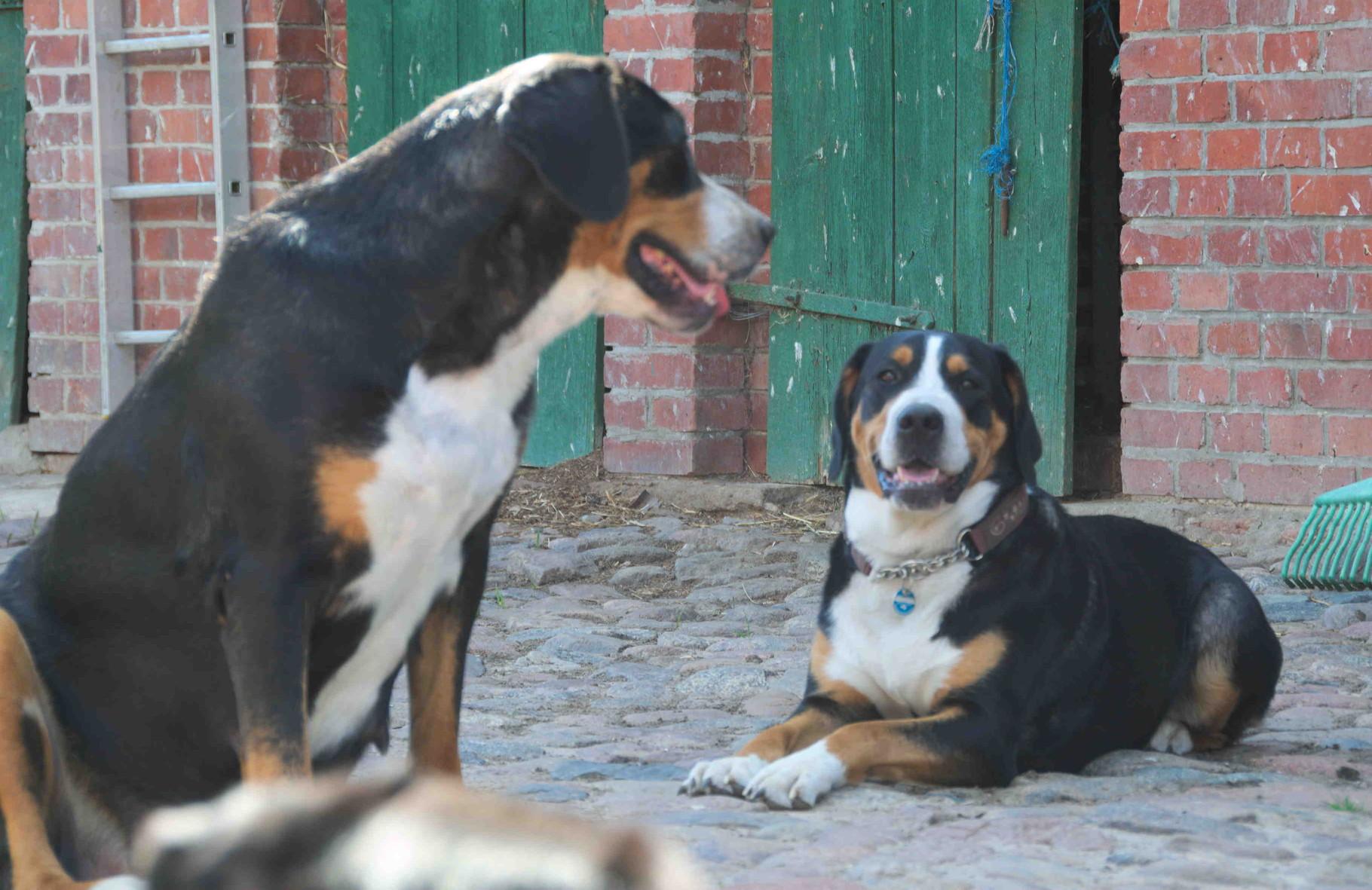 Besuch bei Mama (links), Ashanti (rechts) 2013