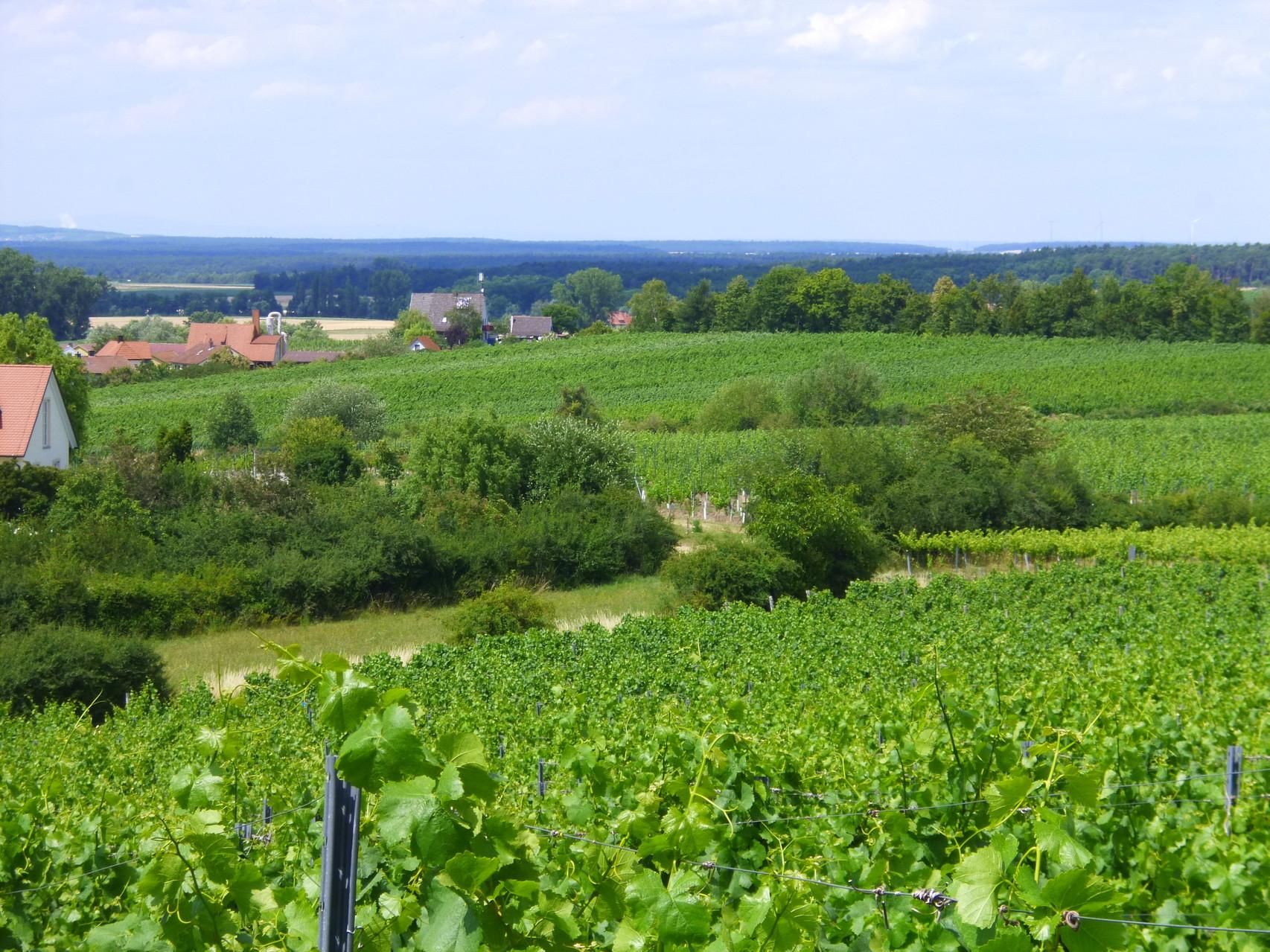 Die Weinberge im Ort