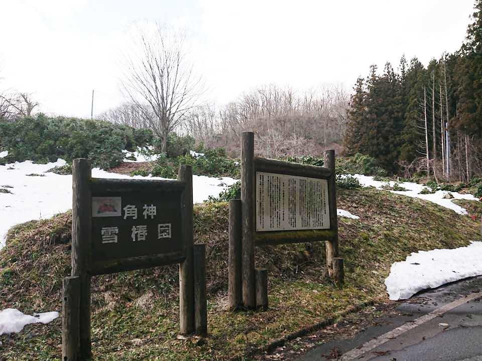 210315角神雪椿園001