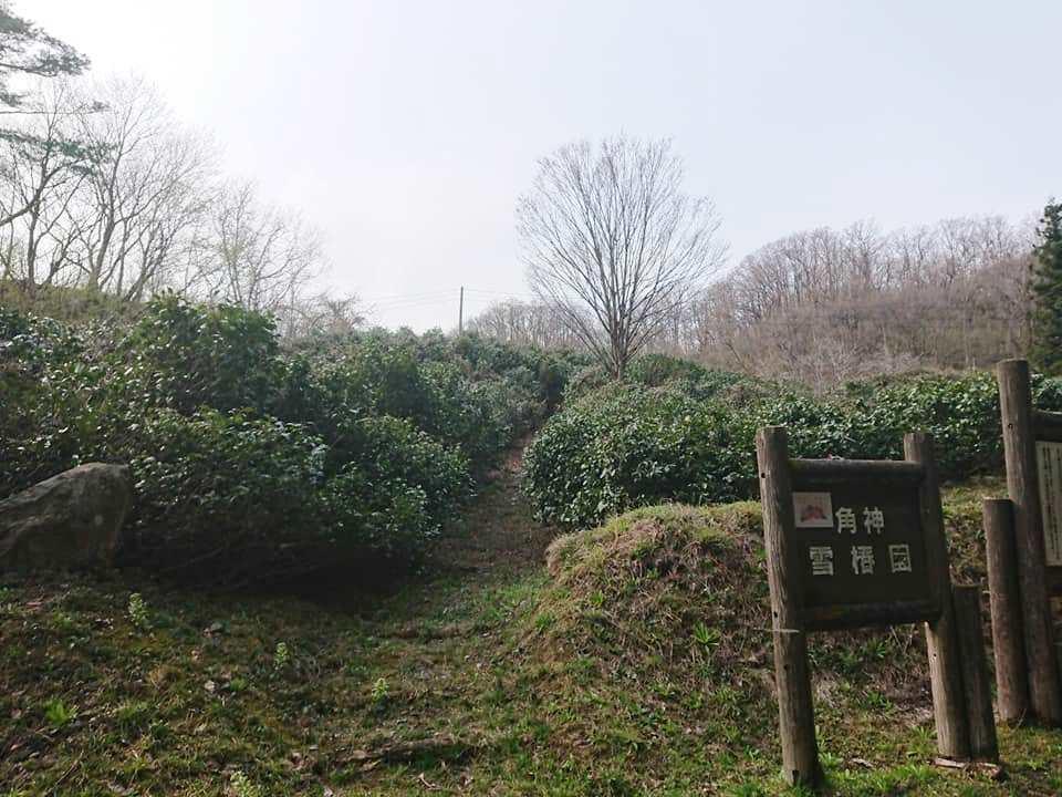 210408角神雪椿園001