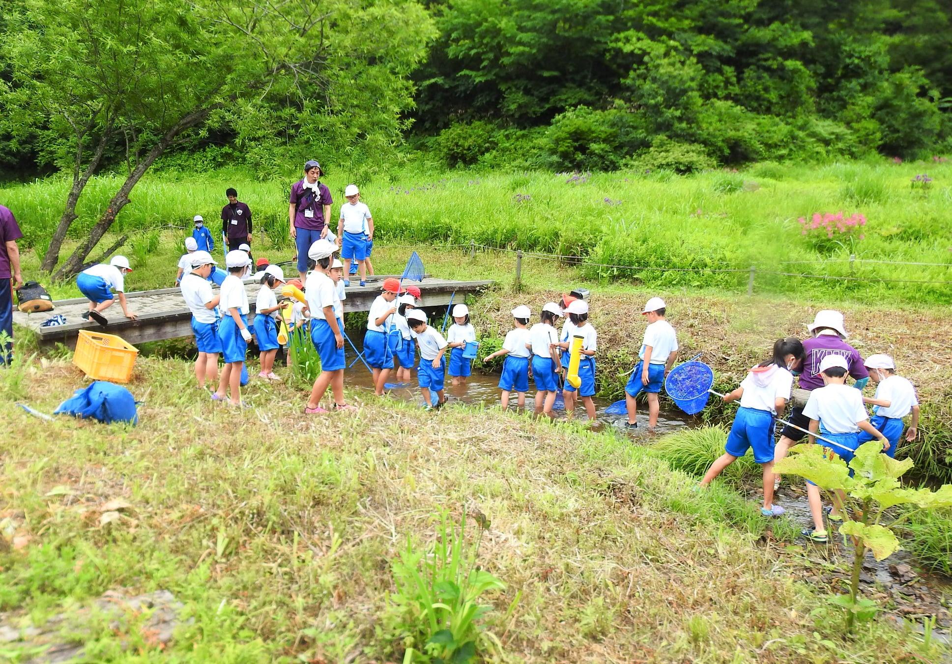 ヌマエビ、メダカ、小型の魚などを観察