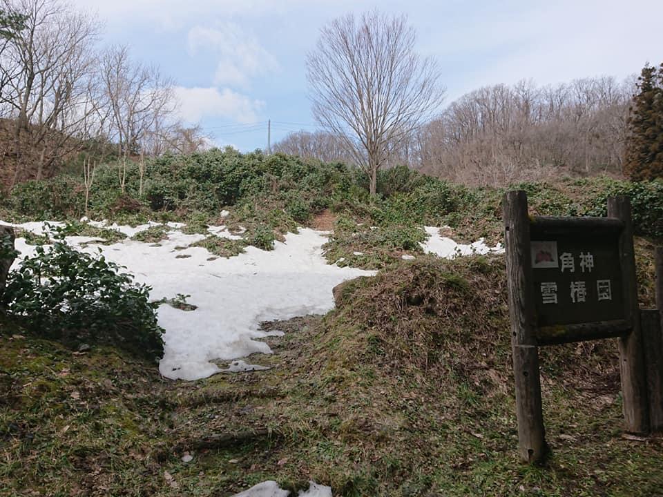 210319角神雪椿園001