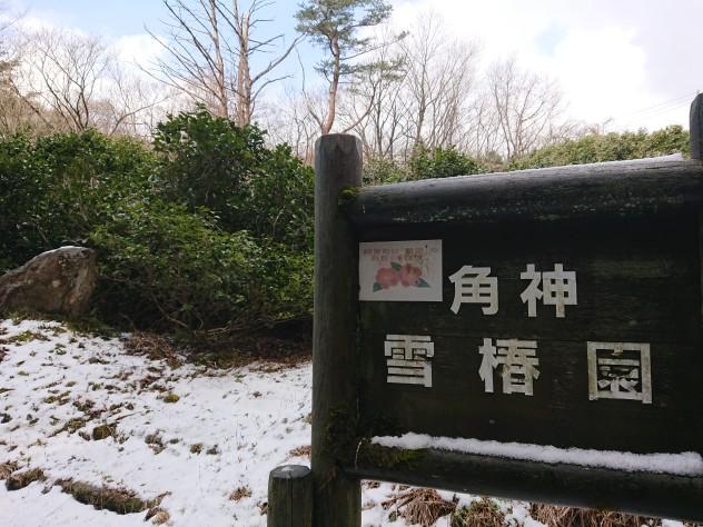 20200306角神雪椿園001